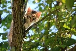 Katzenzubehör Katzenklappe