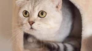Katzenzubehör Katzenhöhle
