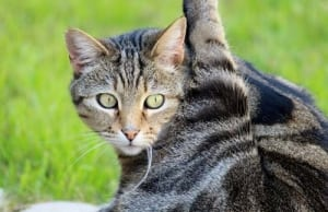 Katzenzubehör Katzenklo