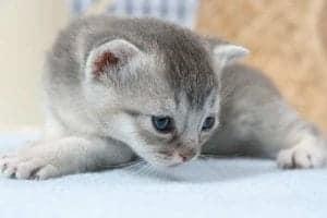 Eine neue Katze zieht ein: Katzenzubehör Was braucht man jetzt?