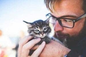 Die Katze hat positive Auswirkungen auf den Menschen