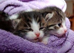 Was kostet eine Katze? Darüber sollte man sich vor der Anschaffung informieren.