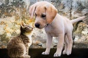 Zusammenführen von Hund und Katze