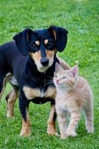 Zusammenleben von Hund und Katze