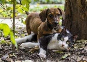 Hund und Katze spielen im Garten