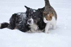 Hund und Katze spielen im Schnee