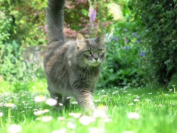 Alles, was man über den Freigang der Katze wissen muss