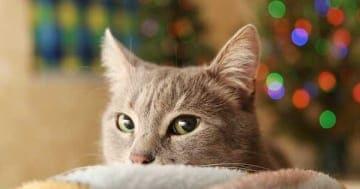 Silvester ist für die Katze purer Stress