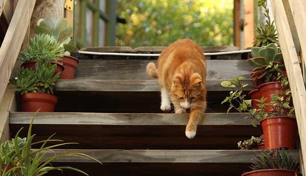 Nicht jede Katze hat es so bequem nach Draußen - als Alternative gibt es für Wohnungskatzen die Katzenleiter