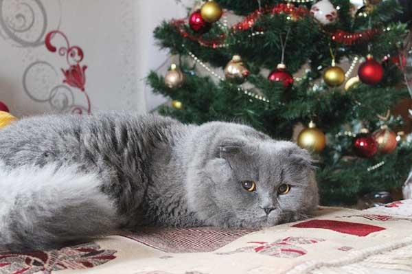 Katzen und Weihnachten - so geht's gut