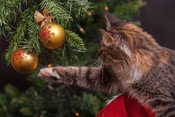 Der Weihnachtsbaum - für die Katze sehr spannend