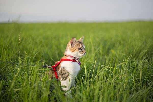 Katzenleine - hier scheiden sich die Geister von Katze und Mensch