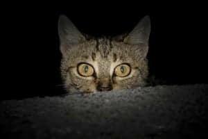 Was macht ein Freigänger in der Nacht?