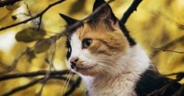 Die richtige Katzenernährung für ein gesundes Katzenleben