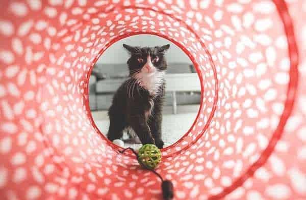Das richtige Katzenspielzeug sorgt für Abwechslung und Bewegung bei der Katze