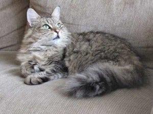 Katzenhaare entfernen durch regelmäßiges Waschen der Unterlagen
