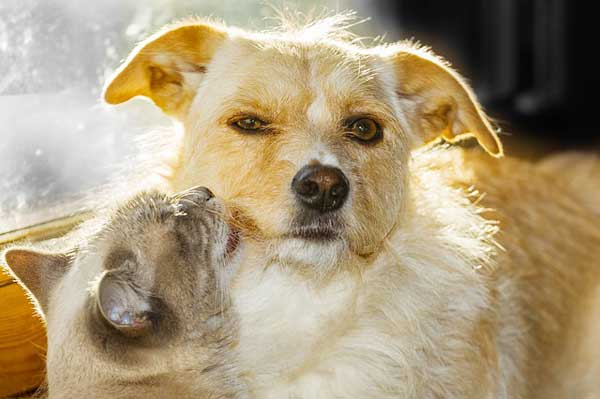 Katze und Hund können sich gegenseitig mit Krankheiten anstecken