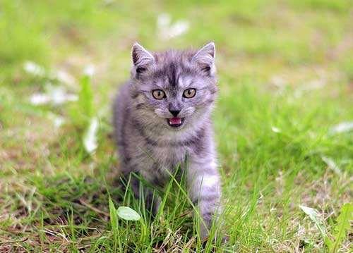 Wann miaut meine Katze?