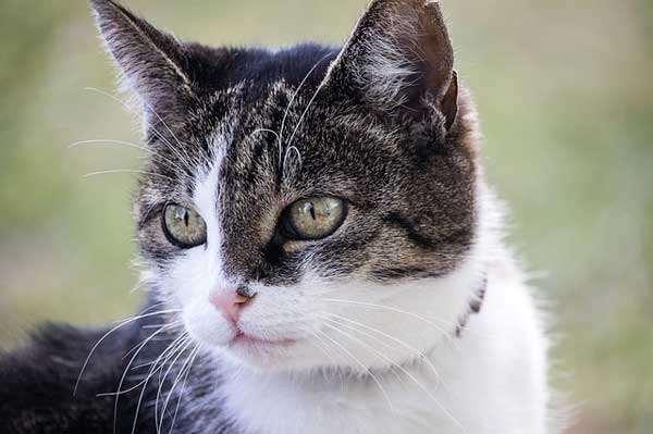 Ein gutes Flohhalsband Katze sitzt fest aber nicht zu eng