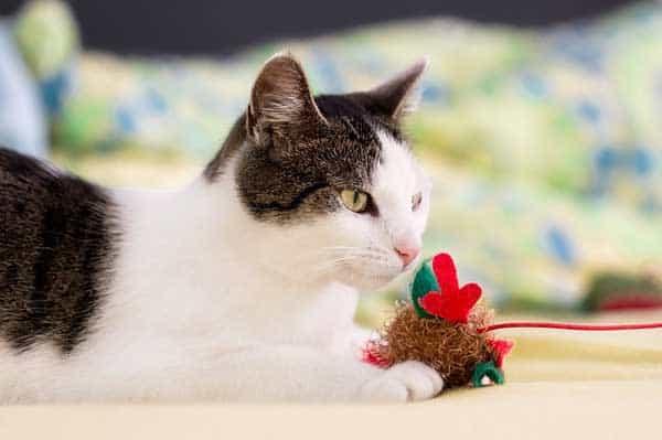 Spielzeug für die Katze sollte passen zur Katze ausgewählt werden