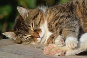 Katzen schlafen viel.