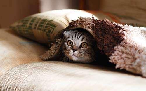 Damit die Katze gesund bleibt, sind jährliche Tierarztkosten einzuplanen