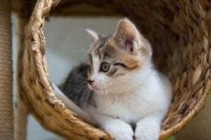 Katzen brauchen einen Rückzugsort