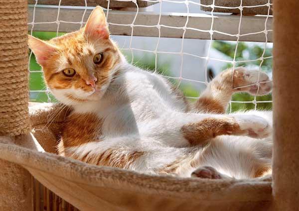 Ein Katzennetz für den Balkon bietet Sicherheit