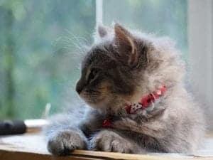 Wussten Sie es: Katzenschnurren heilt
