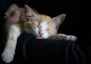 Während Katzen- Schlafs darf auch mal gestreichelt werden.